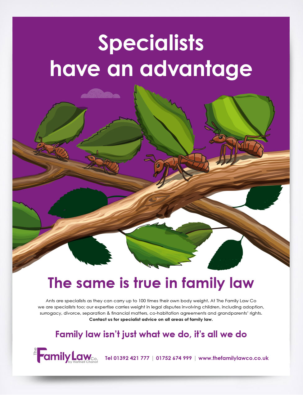 The Family Law Co Ants Advert